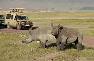 Rinoceronti safari in Tanzania