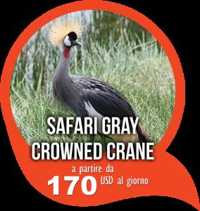 Offerta Graycrowned safari avventura
