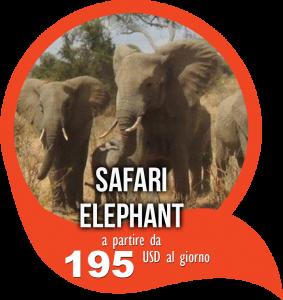 Offerta Safari in Tanzania Elephant