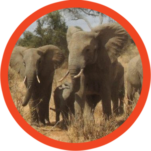 Offerta Safari Elephant