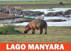 Parco del Lago Manyara