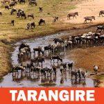 Parco Nazionale del Tarangire