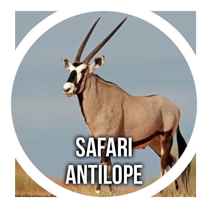 Antelope Safari