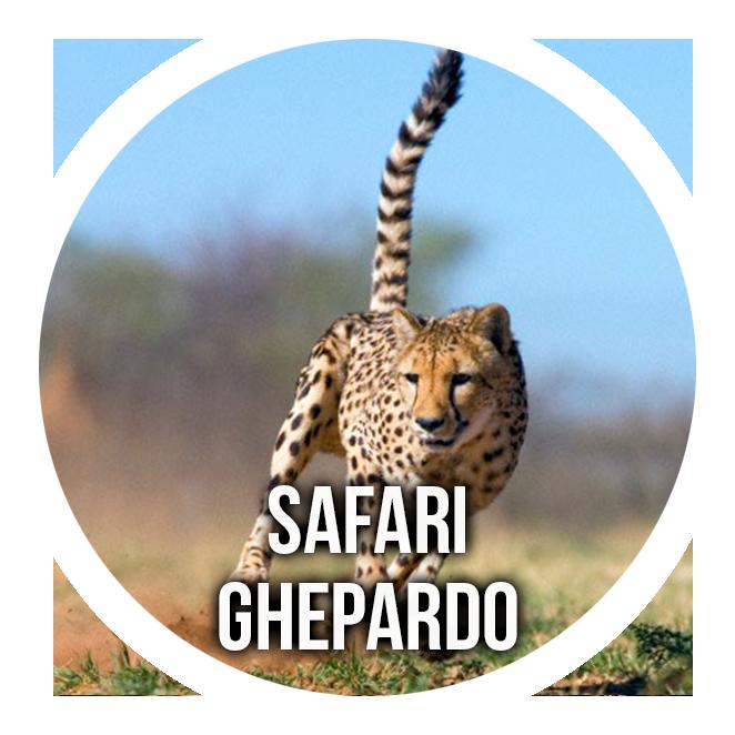 Cheetah Safari: 7-day itinerary in Tanzania