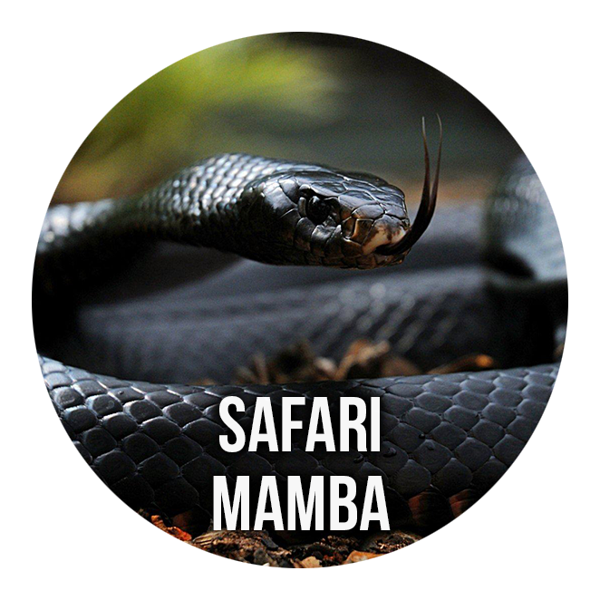 Safari Mamba 1