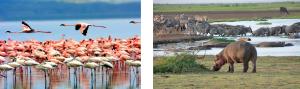 safari tanziania offerte