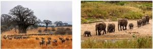 safari tanzania roma