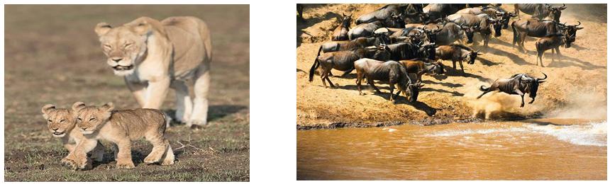 offerte safari tanzania