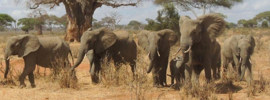 elefanti tanzania tour