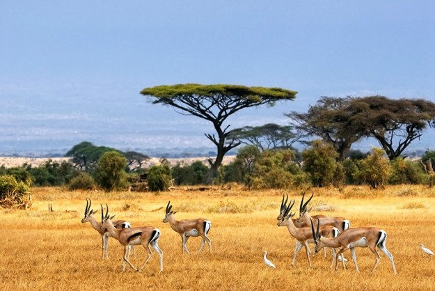 Visit to the Serengeti National Park