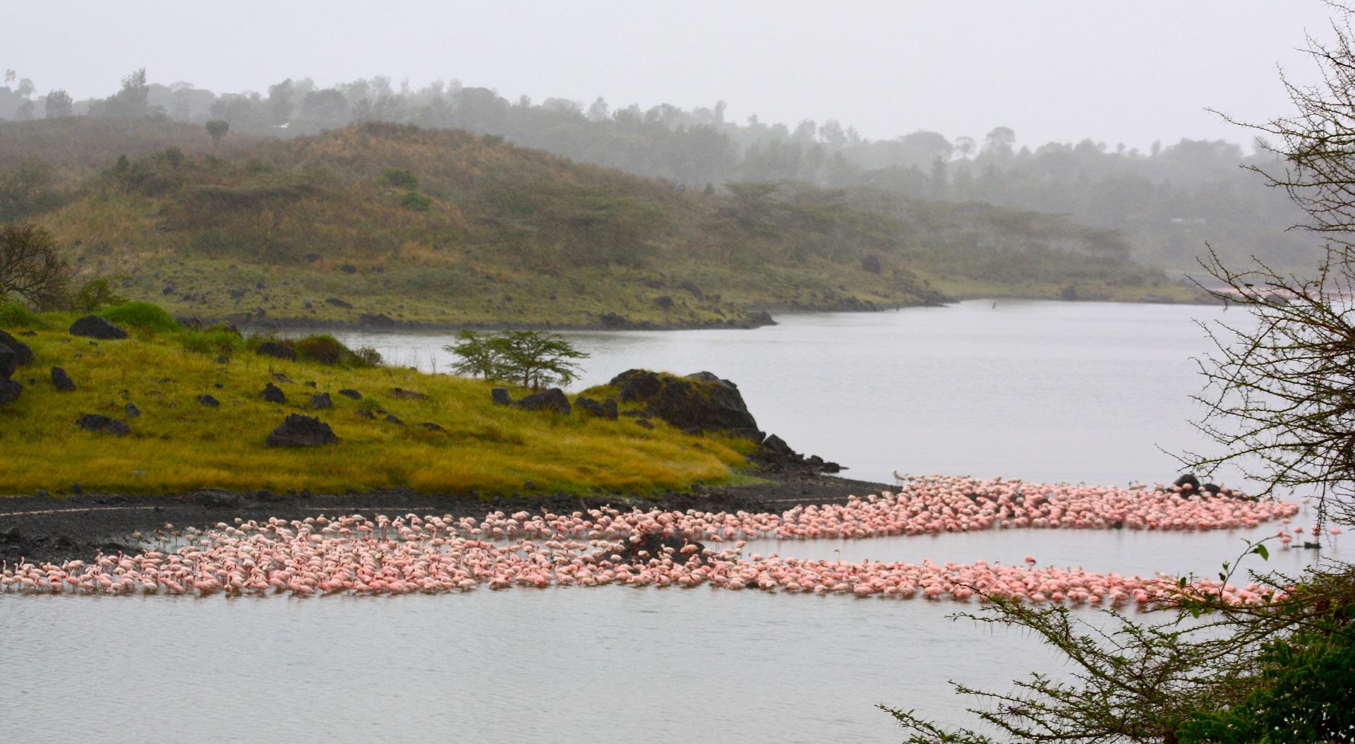 parco nazionale arusha, safari, tanzania