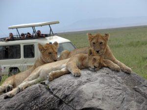The Fauna of Serengeti Park