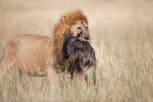 leone-tanzania