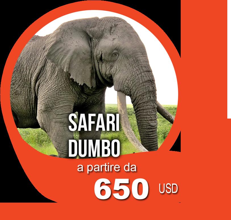 Safari Dumbo