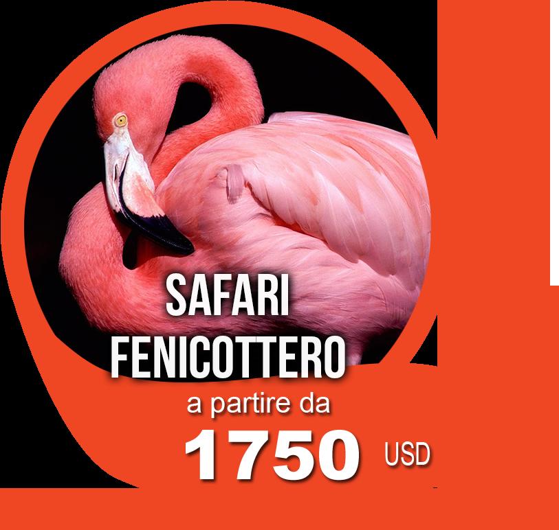 safari fenicottero 1