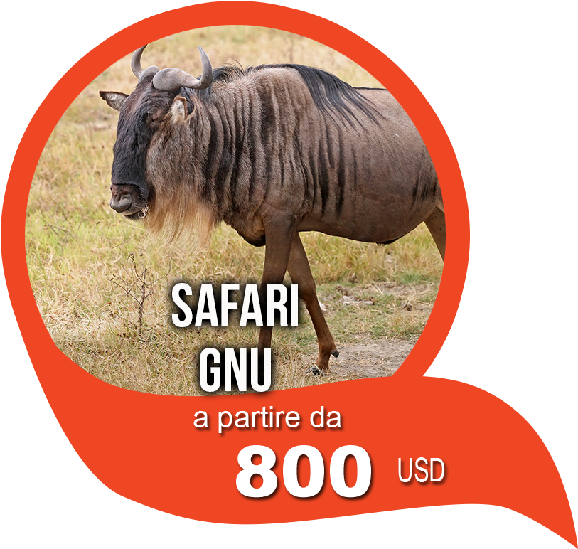 Safari Gnu