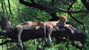 leoni lago manyara