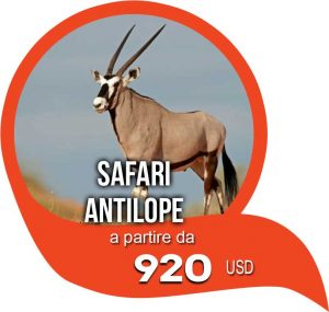 safari antilope