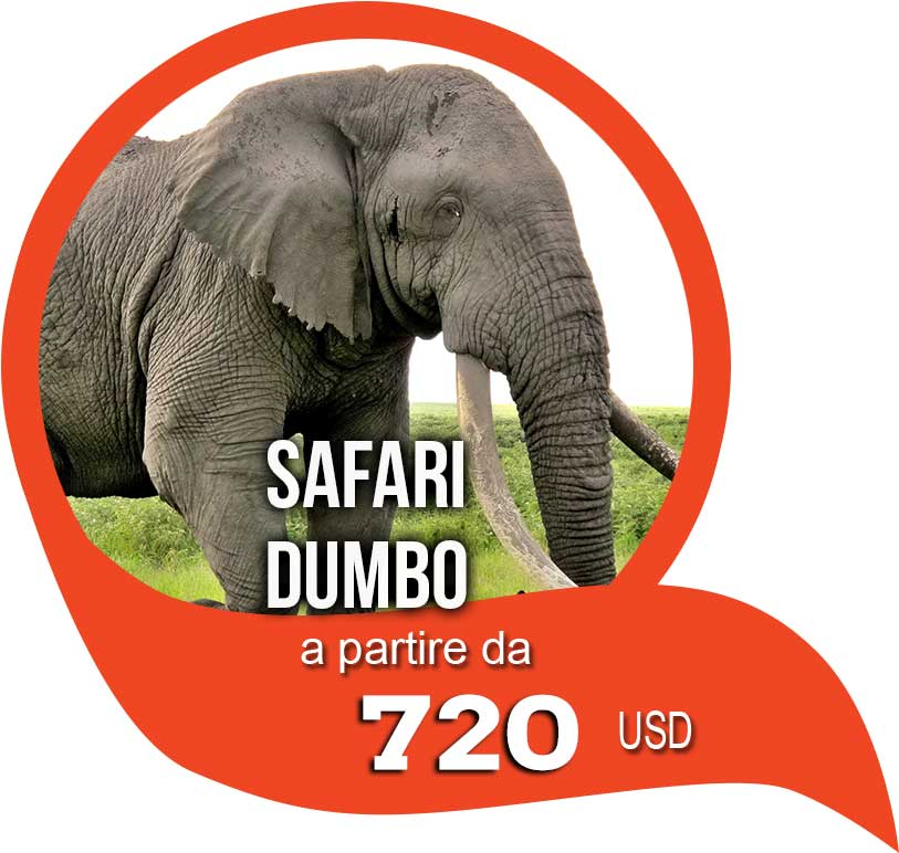 safari dumbo in tanzania