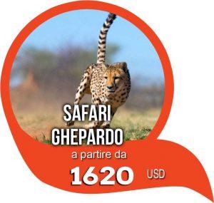 safari ghepardo tanzania
