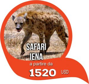 safari iena