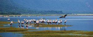 uccelli lago manyara