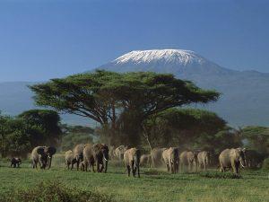 elefanti kilimangiaro