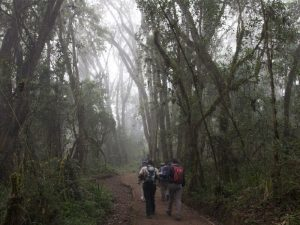 foresta parco del kilimangiaro