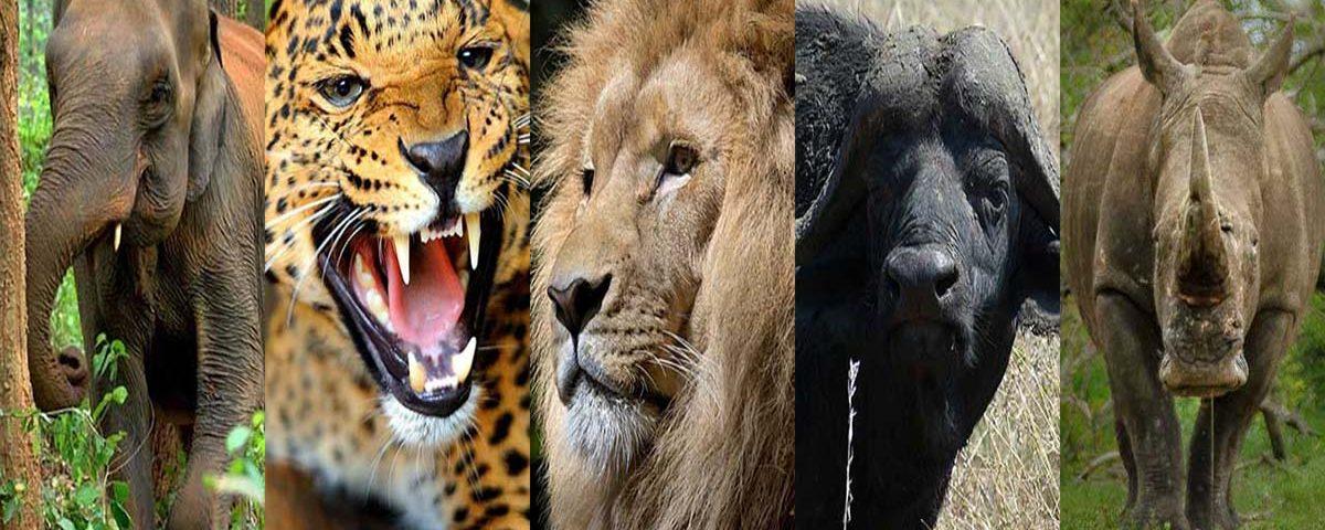 Big Five Animali