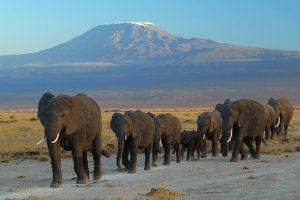 elefanti parco nazionale di arusha