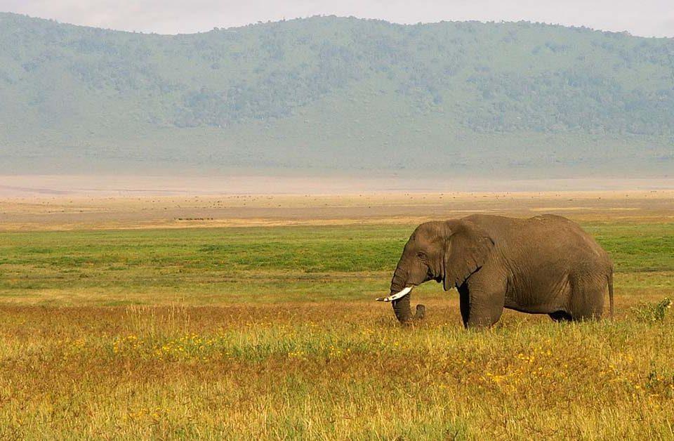 Come organizzare un viaggio in Tanzania