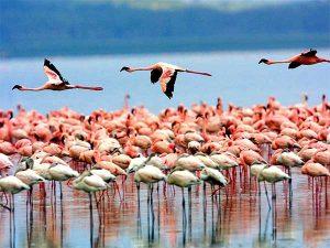 Parco Nazionale del lago Manyara