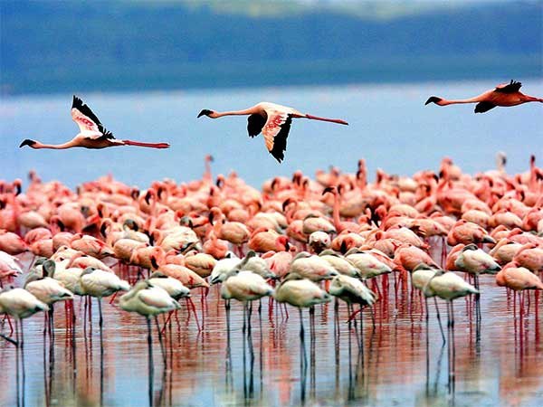 The Wonders of the Lake Manyara Park