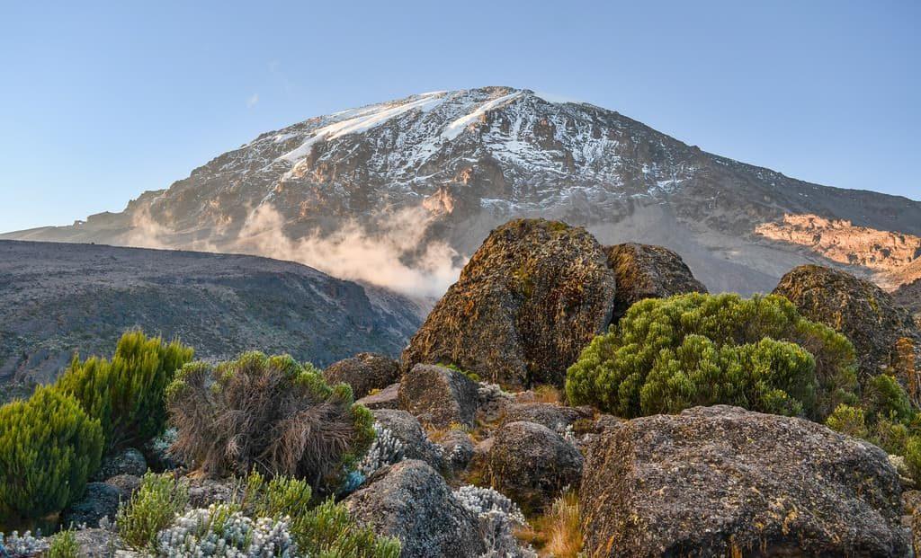 Visit to Kilimanjaro Park