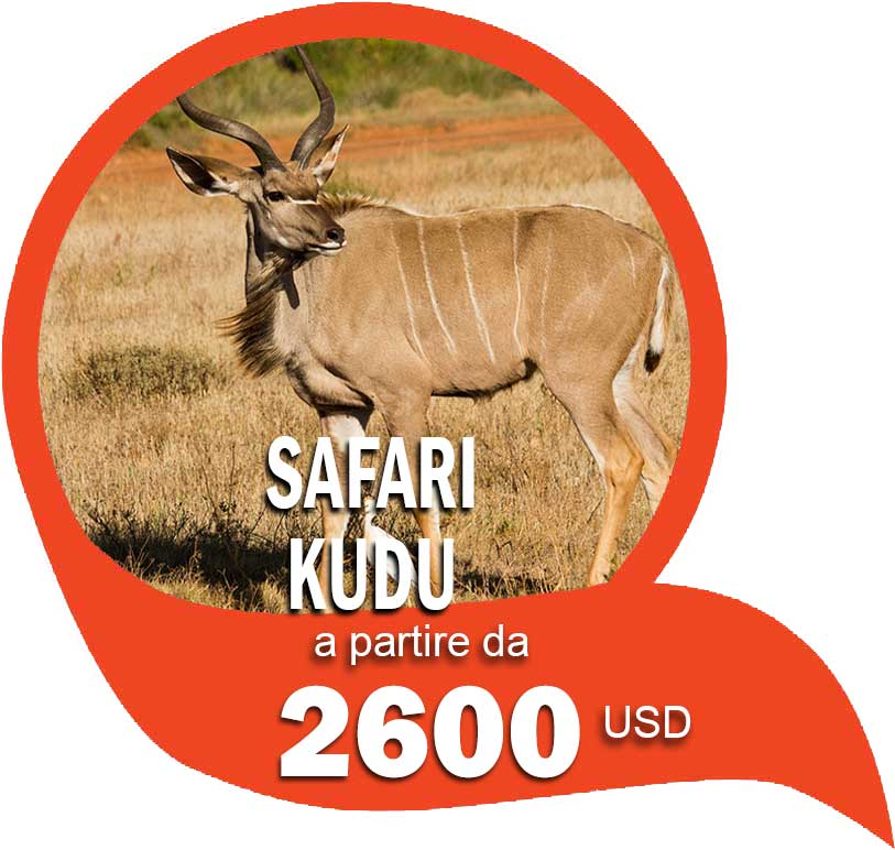 Itinerario Safari Kudu