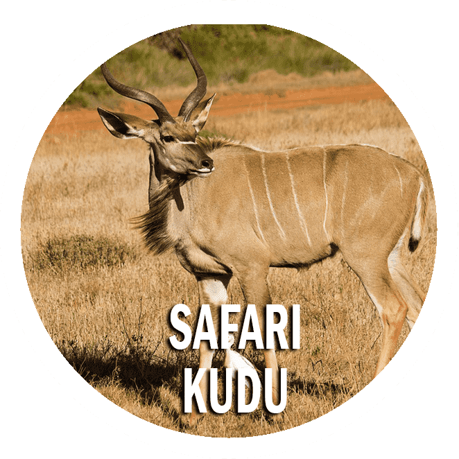 Safari Kudu: 11 days itinerary in Tanzania