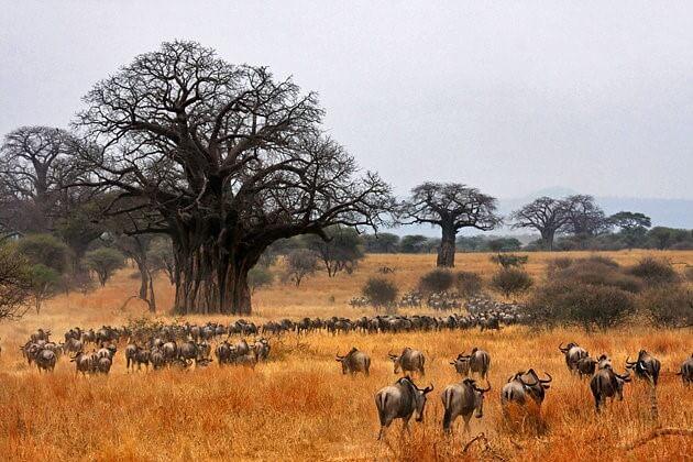 La fauna del Parco del Tarangire