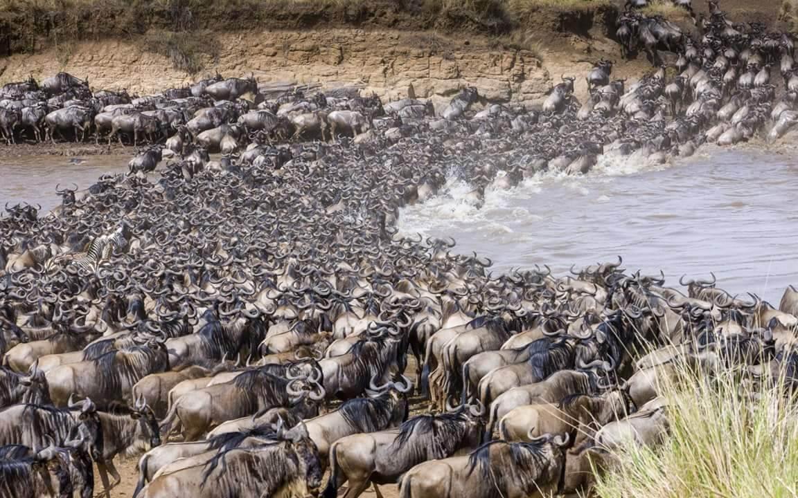 La migrazione del Parco nazionale del Serengeti
