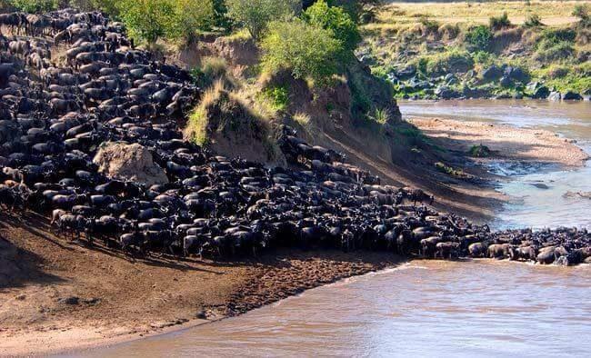 North of Serengeti Park