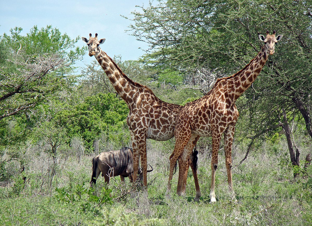 Selous Wildlife Reserve Animals