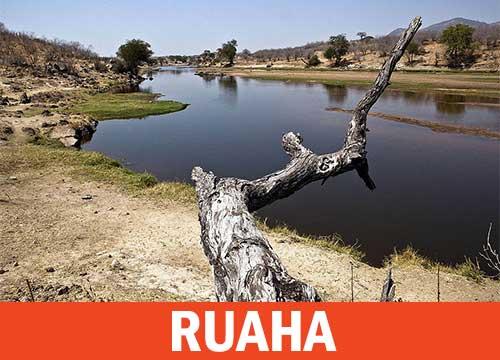 Ruaha Parco del Sud Tanzania