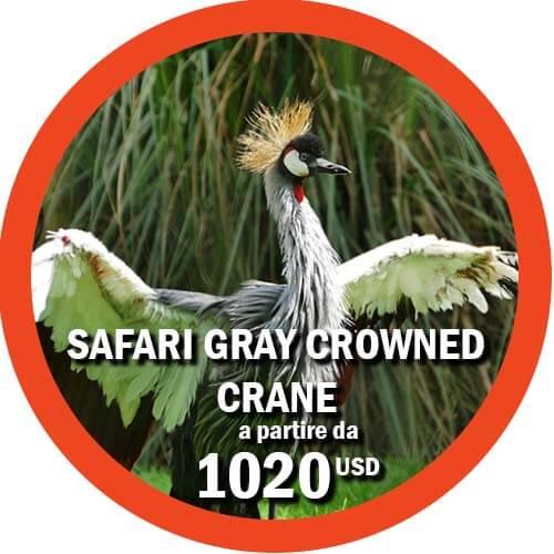 Offerta safari Tanzania Gray Crowned Crane