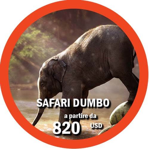 Safari Dumbo