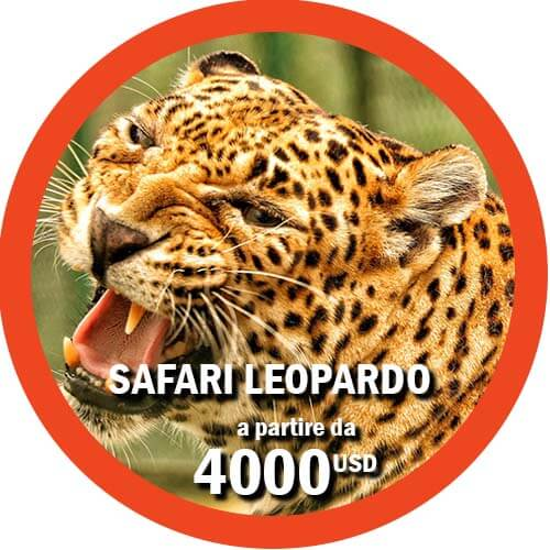 Viaggio in Tanzania - Safari Leopardo