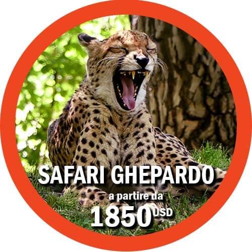 Itinerario Ghepardo Viaggio in Tanzania