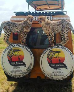 Safari Avventura - Tour Operator per Safari in Tanzania