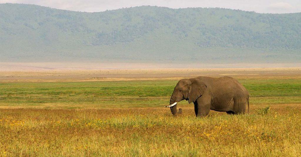 How to plan a Tanzania safari