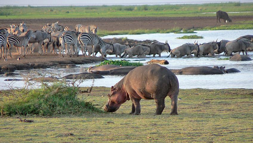 Visit the Lake Manyara National Park