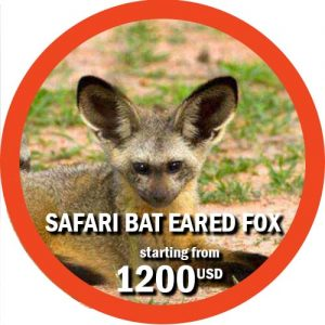 3 Day Safari in Ruaha Southern Park Bat-Eared Fox Itinerary