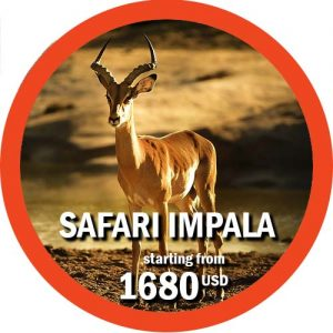 6 days safari in the northern parks of Tanzania Impala
